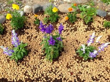 ブルーサルビアとマリーゴールドの花壇
