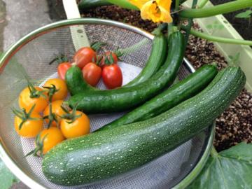 庭の野菜を収穫