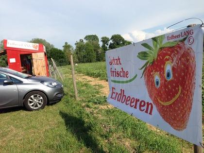 ドイツのイチゴ狩り①