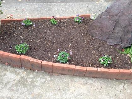 チューリップ花壇2018植えた後 1