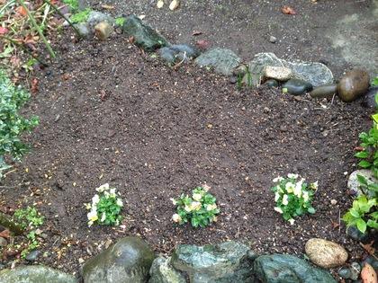 チューリップ花壇2018植えた後 2