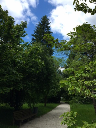 ドイツの植物園 広葉樹から針葉樹へと変わる小径