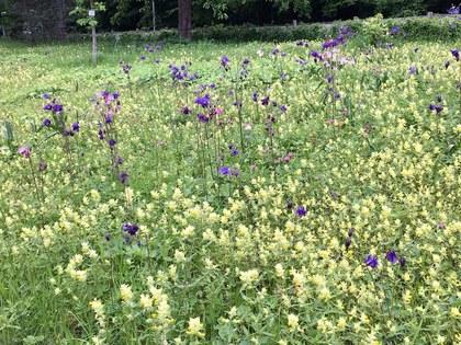 ドイツの植物園 針葉樹林を抜けた後に広がる野原の花々